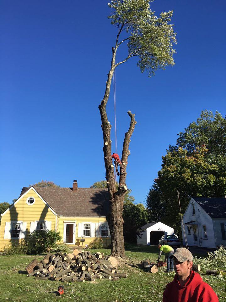 Take down dead trees