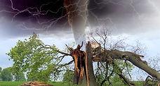 storm-damage-tree-care.jpg