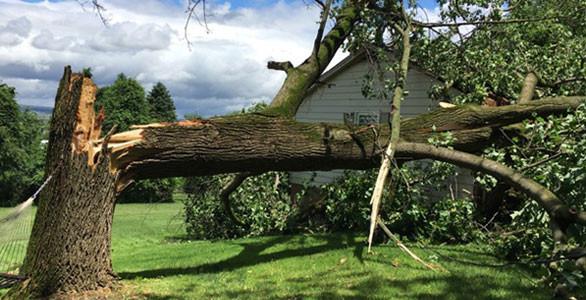 Storm damaged tree.jpg