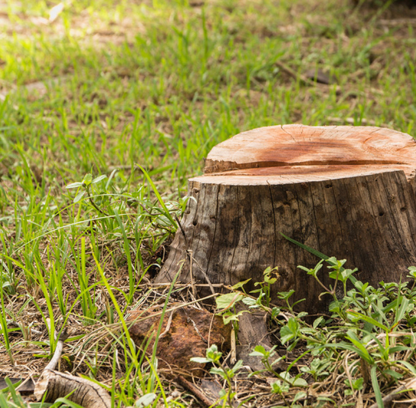 ugly tree stump