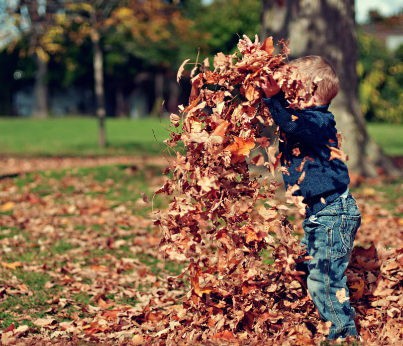 leaves-and-kids-1030x696.jpg