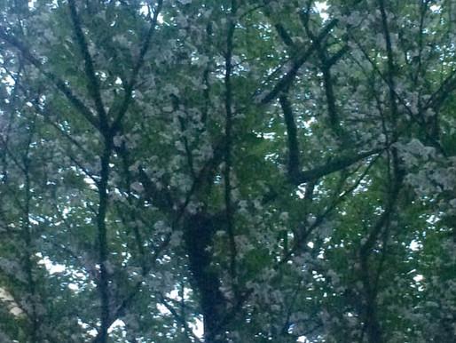 冷たい日本酒の滝 / 5月 / ロルフィング