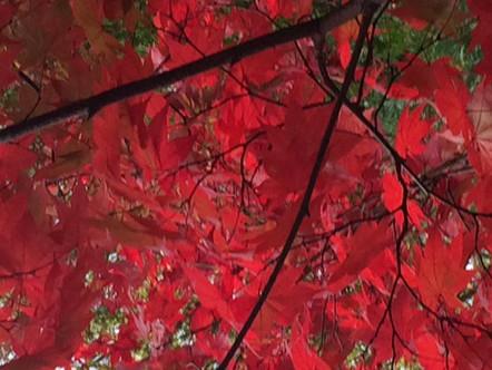 「まっかな秋」