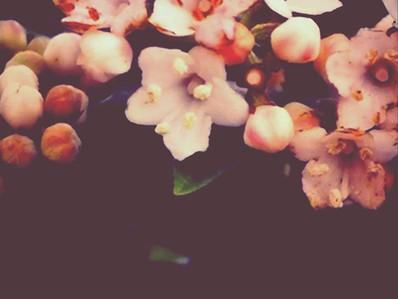 大きな花(出張グリーフマッサージ)