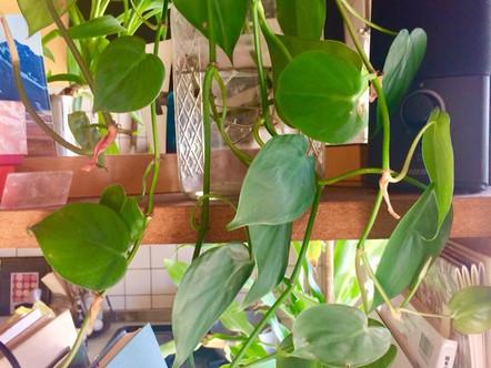 植物は猫と違う(昨日のデザート3/3)