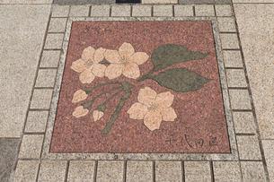 Tokyo asphalt