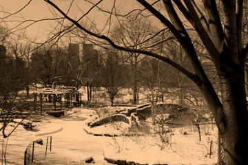 Central Park in sepia, 2009