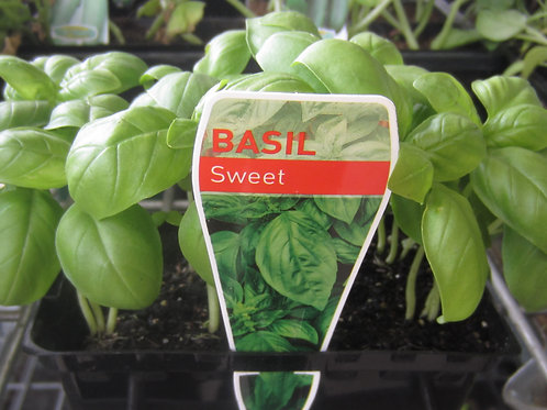 BASIL SML & LGE - NOT ALWAYS AVAILABLE