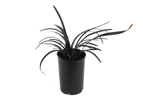 MONDO GRASS BLACK TUBE
