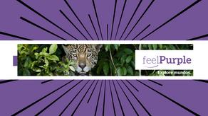 Pantanal nas rotas do feelPurple e da Globo. Conheça o Aymara Lodge