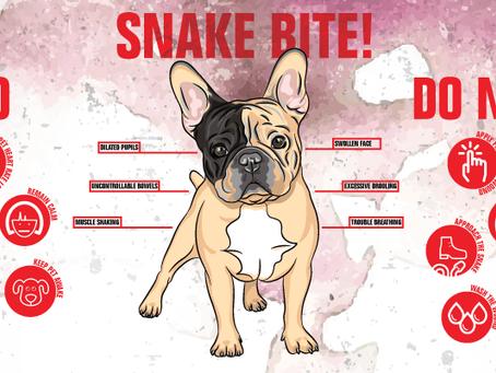 Snake BITES!