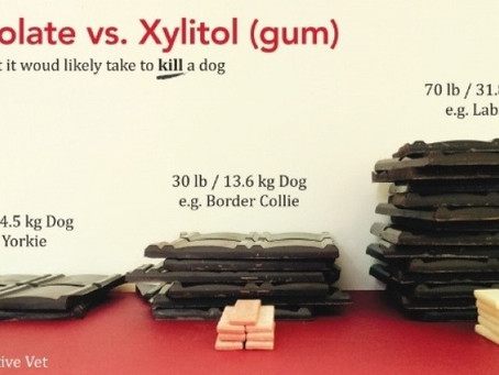 Xylitol is DANGEROUS for your Dog!