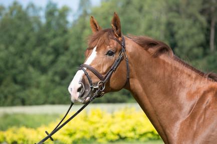 IX Young Polish Sport Horses Championships