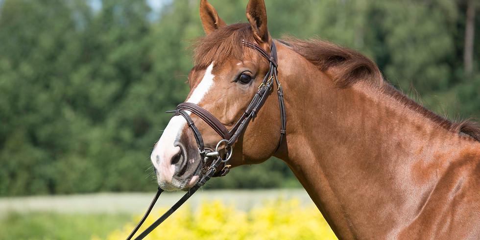 Young Horses Polish Championship