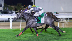 Abu Dhabi | Race no. 4 | Wathba Stallions Cup For Private Owners Only