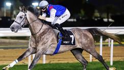 Abu Dhabi | Race no. 5 | Al Badayer Desert