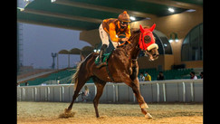 Al Ain | Race no.4 | Al Qattara