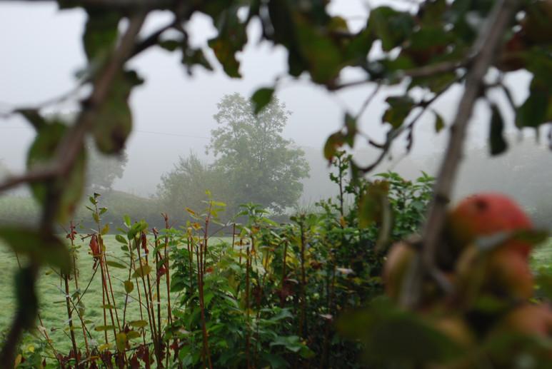 Photos: October in the Flower Garden