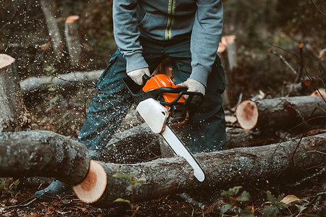 a man sawing a tree with a chainsaw. rem