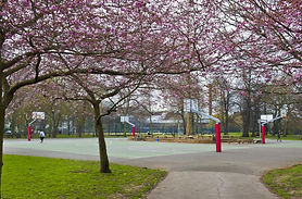 Image of basketball courts and cherry blossom in Ravenscourt park