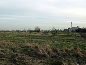 image of grassy area
