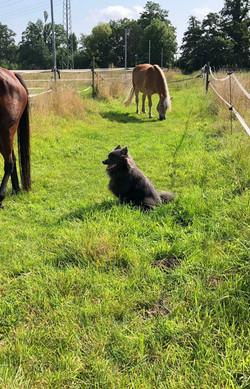 Coco mit Pferd