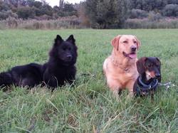 Chaya und ihre Freunde
