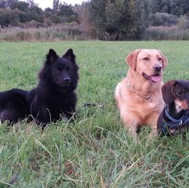 Chaya und Freunde