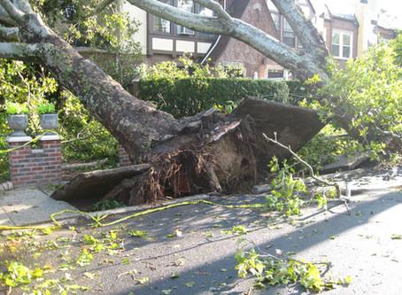 24/7 Emergency Tree Service & Hazardous Tree Care