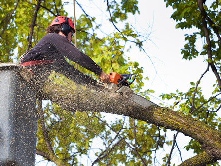 Your Safe Choice for Utility Tree Pruning and Power Line Tree Maintenance
