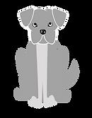 caoviver porto maia cao gato adoptar