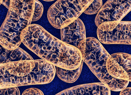 Mitochondria-More than the Cell's Powerhouse; Aging like a Bo$$ & Why Willpower is BullS**t