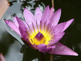 Blume (1).JPG