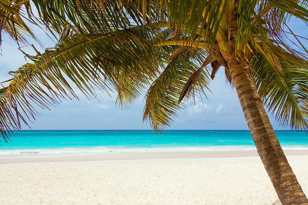 palm tree, beach, sand, sea, sun