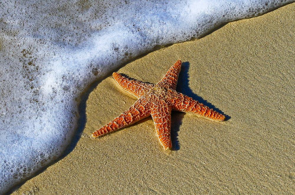 starfish, sand, sea, shore, beach, ocean
