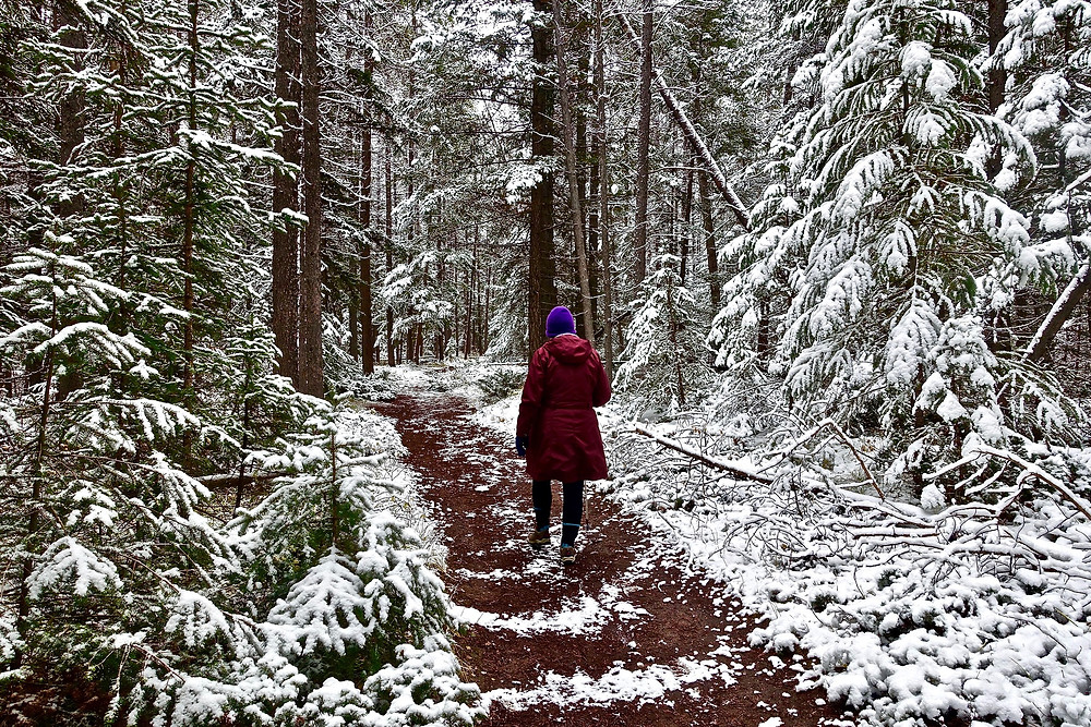 Winter, walk, snow, cold, trees, forest