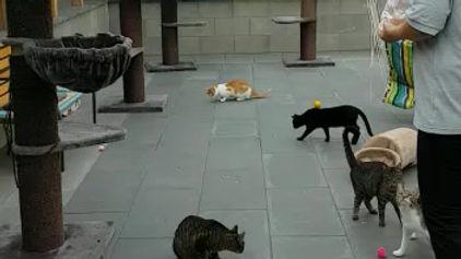 Reges Treiben im Katzenhaus...
