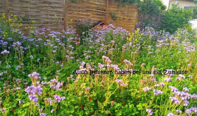Blumenwiese und Bienenhotel