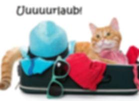 Katze Urlaub.jpg