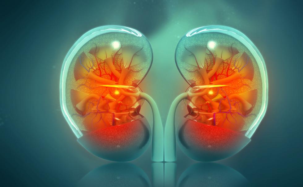 Kidney Focus