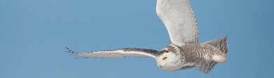 Fugletrekkets gåter, vandreutstilling