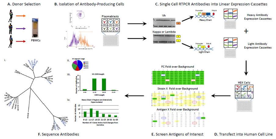 Antibody%20Development%20Platform_edited