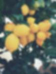 Photo de citron encore sur leur arbre