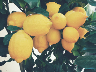 Growing Fruit in Temperate Climates