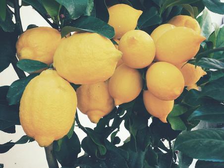 Symbolic entities in 'Vampires in the Lemon Grove'