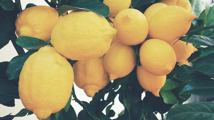 Lemons to see near Mas Saint-Gens