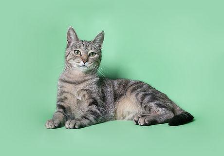 Cat on Green_edited.jpg