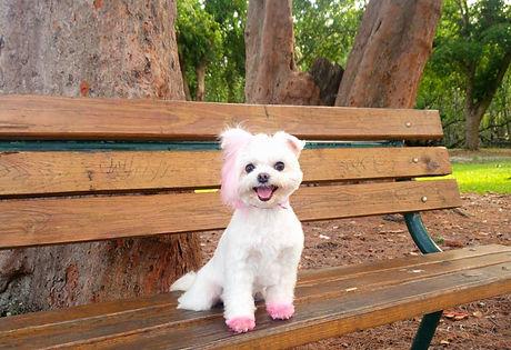 Pinkie Twinkie_edited_edited.jpg