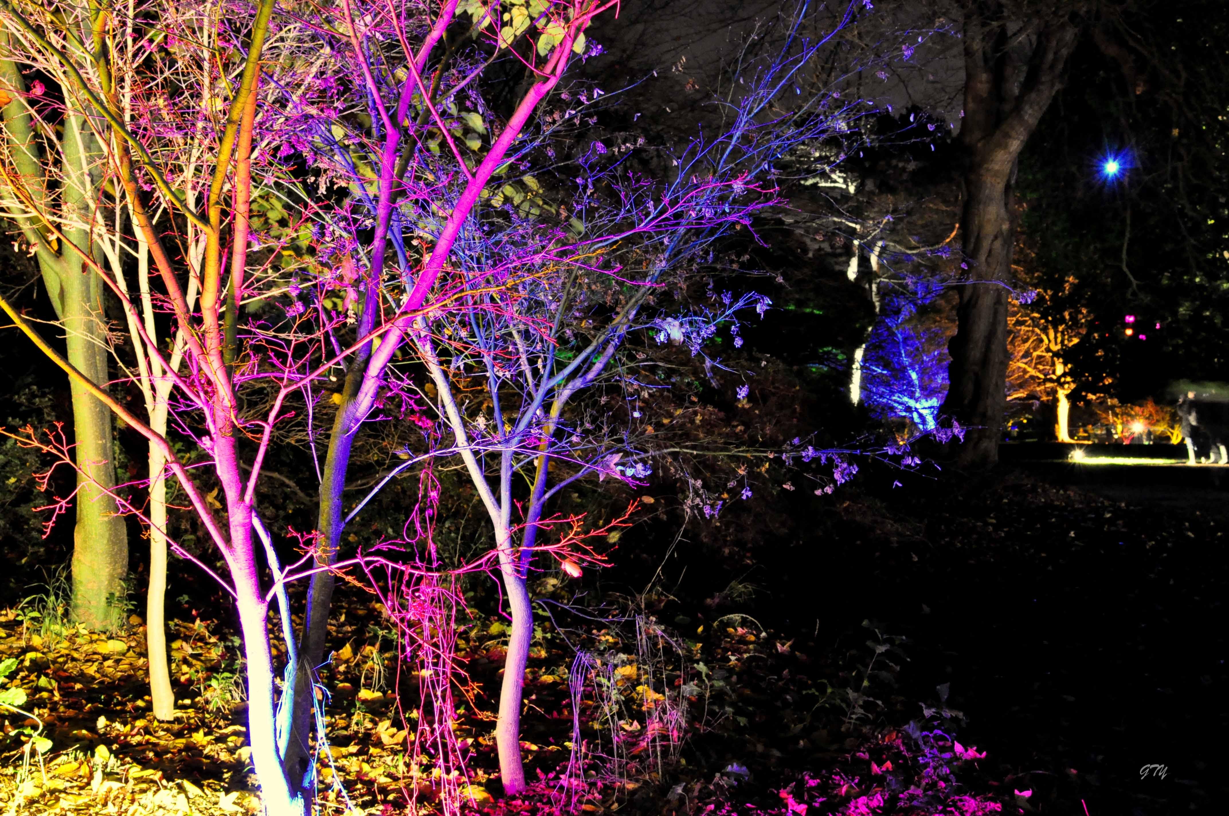 Enchanted Woodland