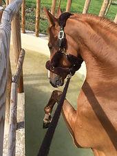 thalassothérapie cheval